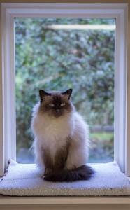 vert_cat